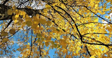 Jeseň v Bratislave